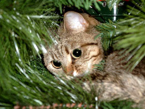 Phoebe in tree